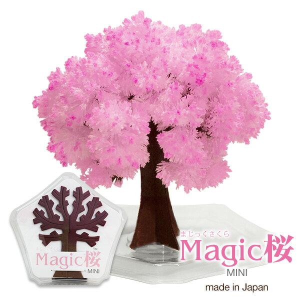 Magic桜ミニ マジック桜 海外へのお土産に エア花見magic sakura マジック…...:otogino:10045094