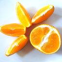 愛媛県産 紅マドンナ 約1Kg 柑橘類の貴婦人