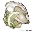 オレロン島の活牡蠣 白い真珠96ケ オイスター