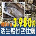 ★三重県産 ★活生殻付き牡蠣★ 約3kg30粒前後  仕入れ...