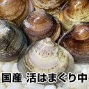★国産 活はまぐり中1kg★鮮度抜群(1/2〜1/7の発送・...