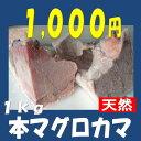 ★本マグロカマ(1kg前後 )★脂のりのりの肉厚カマを超お買い得1,000円にてご提供!美味しさ、大きさをこの安さでどうぞ!