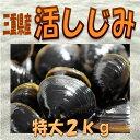 ★三重県産活しじみ(特大)2kg★  干物セット 干物 お中...