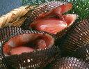 【生きたままお届け 鮮度抜群】 ★特上特大 活生 赤貝2kg★ たんぱく質をはじめ、カルシウムや鉄などのミネラルも豊富