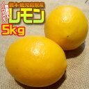 3月23日までのお買い得品【送料無料】【無農薬&ノーワックス】熊本県産 わけありレモン5kg