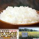 【無農薬米】白米・玄米【合鴨農法】【合鴨米】【地下水使用】【熊本県産】【ひのひかり】北海道、東北は別途追加送料