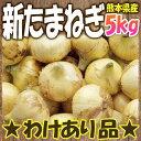 【わけあり】熊本県産 新たまねぎ 5kg【サラたま】SS10P03mar13