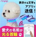 光る 首輪 犬 LED 名入れ 名前入 名前 電話番号 ペット リード ハーネス 散歩 ペット用品 中型犬 小型犬 かわいい かっこいい NEOPOP LED BAND