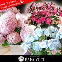 【母の日 ギフト 花】濃いピンクの紫陽花 ハッピー・桃色のピンクが可愛い てまりてまり 水色の紫陽花...