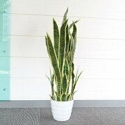 【送料無料】 Funderful 人工観葉植物 光触媒 サンセベリア 90cm 【 光触媒 フェイクグリーン 消臭 インテリアグリーン 抗菌 】