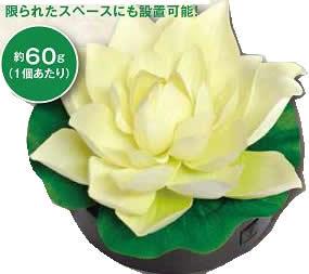 【大感謝価格 】ロータス 蓮花 はすはな