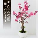 桃 盆栽(ミニ盆栽 bonsai ボンサ...