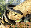 【送料無料:ゆうメール発送】ドッキリ ヘビ ダミースネーク 1.3m 蛇 ジョークグッズ ジオラマ TEC-DMSNKD