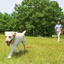 【スーパーSALEで使えるクーポン配布中】軽量ロングリード 長さ20m×幅2.5cm【散歩 リード ひも 鎖 おでかけ ドッグラン 長い 犬 犬用 犬用品 ペットグッズ 国産 日本産】PEPPY(ペピイ)