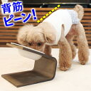 【犬 猫 食器台】傾斜のある食器台 (Lサイズ)(フードボウ...