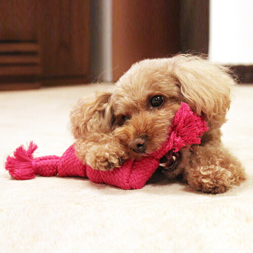 犬おもちゃスーパーロープSサイズ(犬用品いぬペットペットグッズペット用品ドッグトイオモチャ玩具ロープ