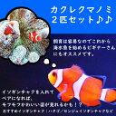 【海水魚・クマノミ】 カクレクマノミ 2匹セット (国産ブリード) (サンプル画像)±3-4cm(生体)(海水魚)(サンゴ)