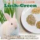 ウサギの餌 プランターで育てる生牧草Lush-Green2点以上でゆうパケット送料無料。(他の商品で