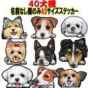 送料無料/A5犬 ステッカー/シール/犬ステッカー犬 ス