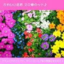 ■新鮮花壇苗■かわいい花苗おまかせ20個セット5種×4個ずつ05P01Oct16