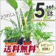 再販決定!5号鉢も入ってこの価格!【送料無料】■観葉植物■観葉植物おまかせ5鉢セット!05P09Jul16