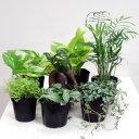 ■観葉植物■ミニ観葉お好み3個セット10P03Sep16