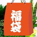 【ご予約品】■お得な福袋■インドアグリーン ガーデニング園芸福袋観葉植物 おまかせ 9鉢
