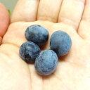 ■良品果樹苗■ブルーベリーブライトブルーラビットアイ系5号ポット苗