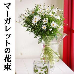 マーガレット (植物)の画像 p1_4