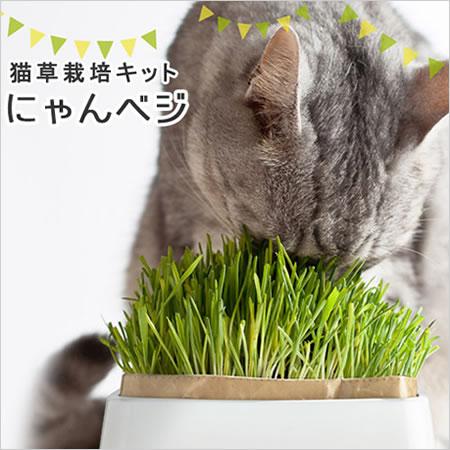 ハリオ猫草栽培キットにゃんベジ