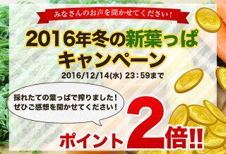 2016冬新葉っぱキャンペーン