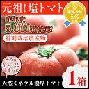 【数量限定】【わけ有り】丸かじり塩トマト 1箱 【熊本県産】【リコピン】