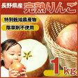 【りんご部門ランキング1位獲得】【国産 りんご】樹上完熟なので甘みが違う!「長野県産」りんご 1Kg 【B品】 【特別栽培農産物】【りんご 訳あり】【ジュース用】【つがる】