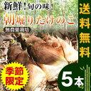 朝掘り!竹の子5本 【1日限定10本掘ります】【たけのこ】【...