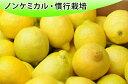 【定期購入】レモン500g入り 「1ヶ月4回コース」【あす楽対応】