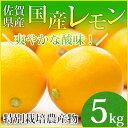 【特別栽培農産物】【佐賀県産】国産レモン5kg