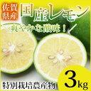 【特別栽培農産物】【佐賀県産】国産レモン3kg【マイヤーレモン】【人参ジュース】【訳あり】