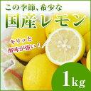 レモンが希少なこの時期に! 国産レモン 1kg 【檸檬】【人参ジュース】