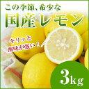 レモンが希少なこの時期に! 国産レモン 3kg 【檸檬】【人参ジュース】