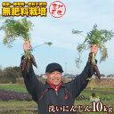 【産地直送】無農薬・無肥料栽培 洗い人参 10kg 茨城県産 送料無料 にんじんジュース