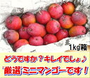 石垣島のミニマンゴー1kg入り約10〜15個、エコ箱入り送料無料【smtb-MS】冷蔵便発送