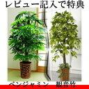 ●レビューでおまけ付き● 【観葉植物 ベンジャミン/観音竹】 大型観葉植物 インテリアグリーン 観音竹 ベンジャミン 人工植物 フェイク