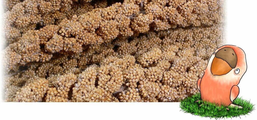 フランス産 黄 粟の穂 1kg×2: 鳥の餌 えさ