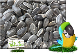大粒 ひまわりの種 3kg×1 : 鳥の餌 えさの商品画像
