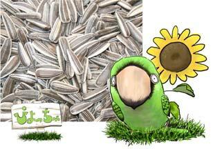 小粒 ひまわりの種 10kg×1 紙袋入 : 鳥の餌 えさ