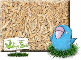 皮付 えん麦 500g×20 : 鳥の餌 えさ