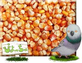 メイズ (とうもろこし) 500g×2 : 鳥の...の商品画像