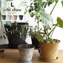 アマブロ アートストーン Lサイズ amabro Art Stone ブラック グレー ブラウン ネイビー プランター 植木鉢 おしゃれ 10〜11号の写真