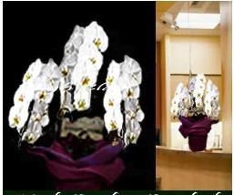 ■【送料無料】【胡蝶蘭・洋らん鉢】《特選品・エントリークラス》XL【大輪ホワイト】 叙勲 受賞 お祝い 「開店・開業・移転・事務所開き・昇進・昇格祝・楽屋見舞い・公演・講演会・芸能・行事・式典・お供え・全般」!《個人・法人・企業・団体・ビジネス》