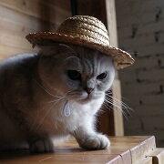 ペット用品 猫ハット 帽子 麦わら帽子 かぶりもの ネコ コスプレ CAT イヌ 犬 紫外線対策 ねこ おもちゃ 玩具 雑貨 グッズ 個性的 可愛い かわいい プレゼント